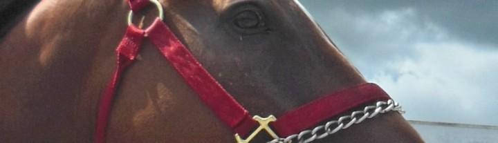 Spanish-Luck-profile-1000x288