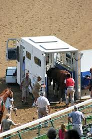 Eight Horses Carted Away by Ambulance Yesterday (a Monday)