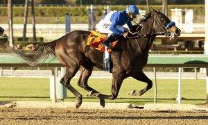 lat-horse-wre0011720004-20131005