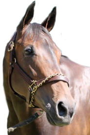 Portrait of the American Horse-Racer