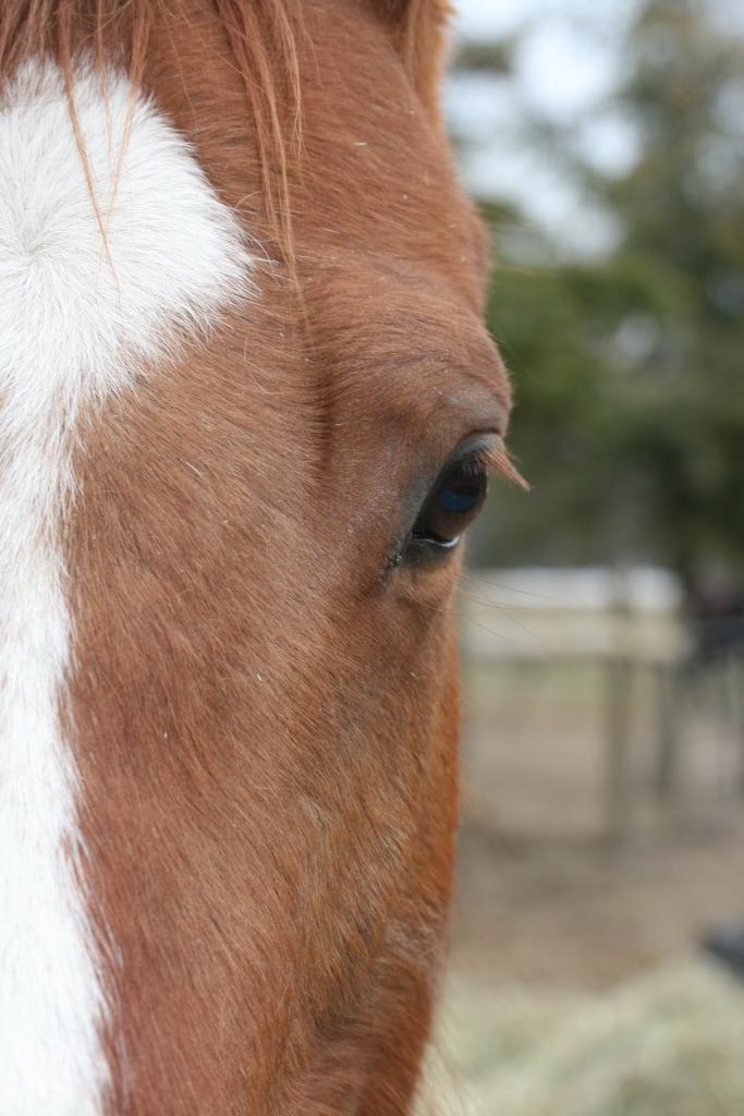 horses 008