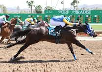 45 Dead Racehorses at Turf Paradise Last Year