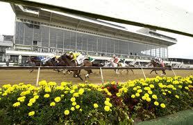Maryland's Dead Racehorses, 2015