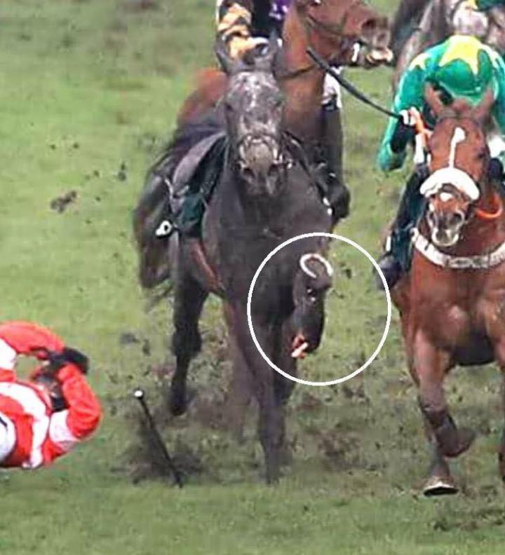 Filly S Fate Was Two Snapped Legs Gruesome Break At